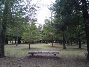 Bosque de Colon